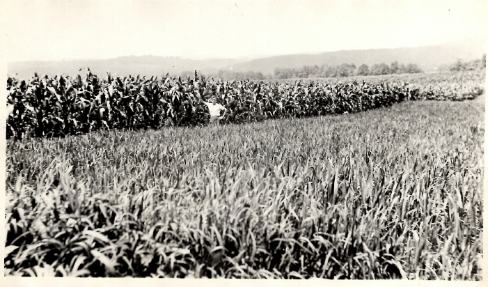 January 8th – Cash Crops, Cheshire County
